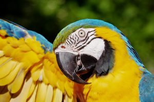 Observing parrots is a great way to have family fun in Miami