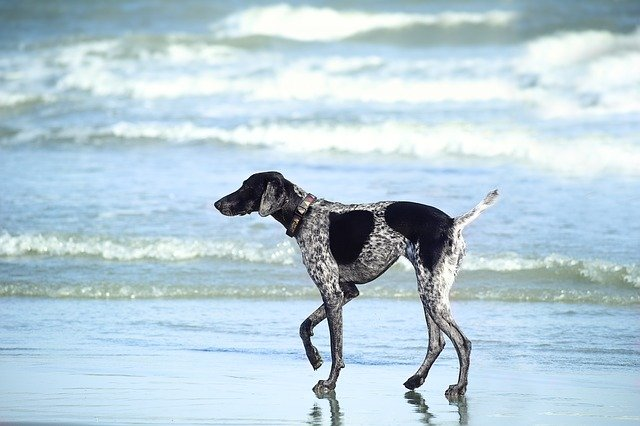 Black and white dog on the beach