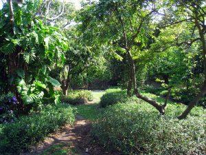 Coconut Grove botanical garden.