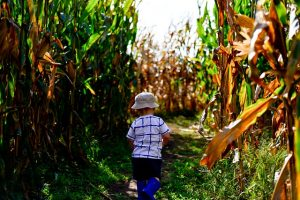 A child running into a corn field.