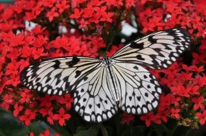 Butterfly that you will wee and enjoy Fort Lauderdale with your family
