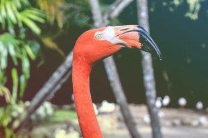 close up of a flamingo head