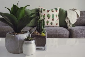 Plants on a table in a very cozy looking living room.