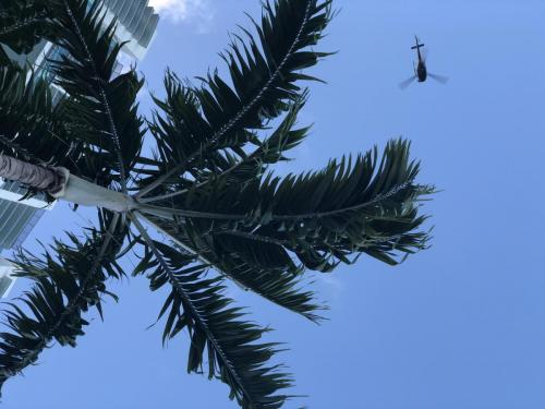 Enjoy the shade under the palm trees while our moving experts in Miami handle the grunt work.